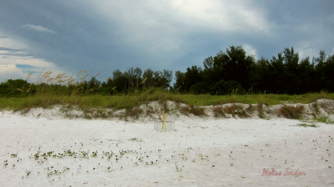 Beach Day Lido 7-23