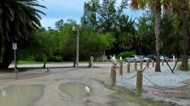 Beach Day Lido1 7-23