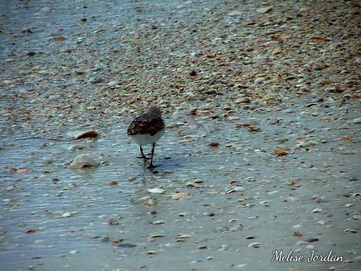 Lido Bird